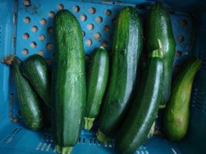 viele Zucchini in einem blauen Plastikkorb